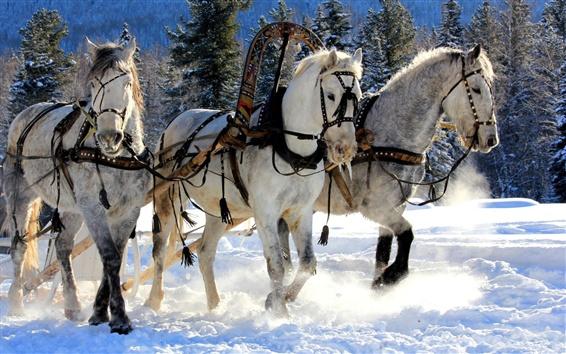 Papéis de Parede Três cavalos brancos, neve, inverno