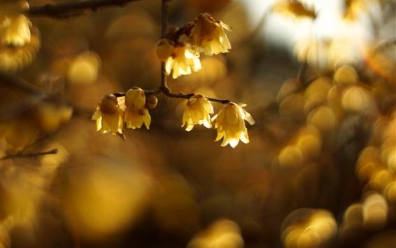 Wallpaper Tree flowers under sun, glare