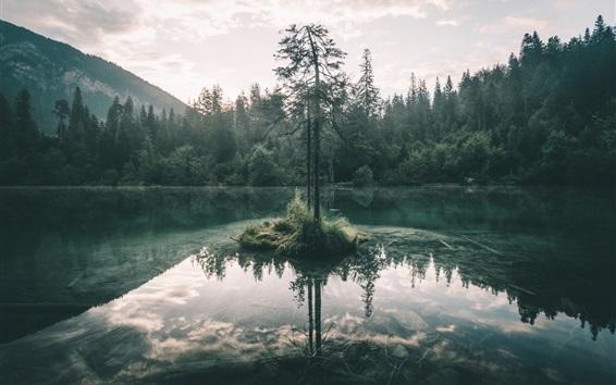 Wallpaper Trees, lake, forest, fog, morning