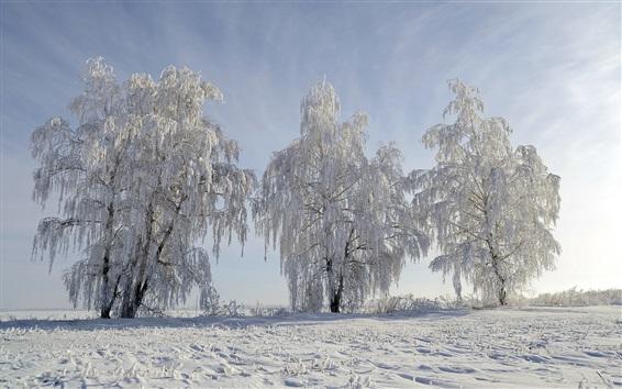 Fond d'écran Arbres, neige, hiver, monde blanc