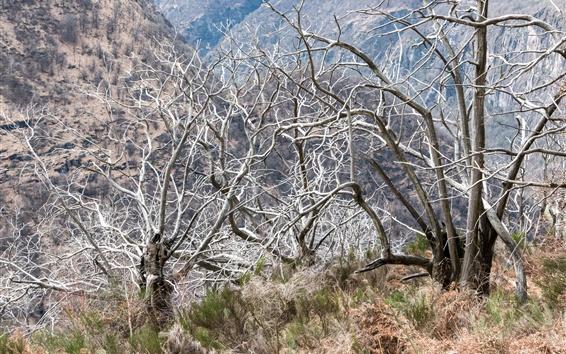 Обои Деревья, ветки, трава, природа