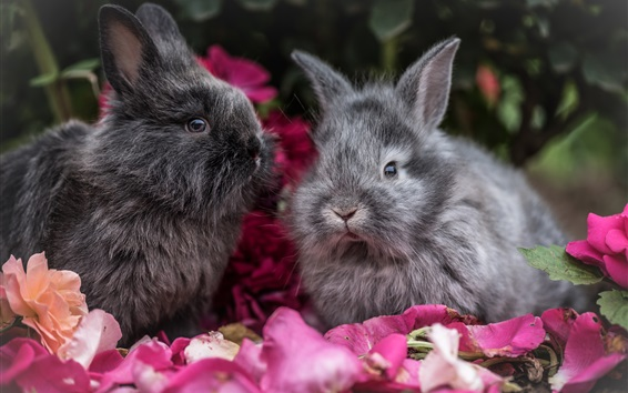 Wallpaper Two gray rabbits, petals