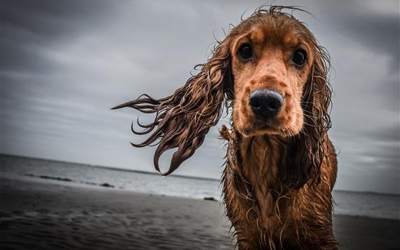 Papéis de Parede Cão molhado, tristeza