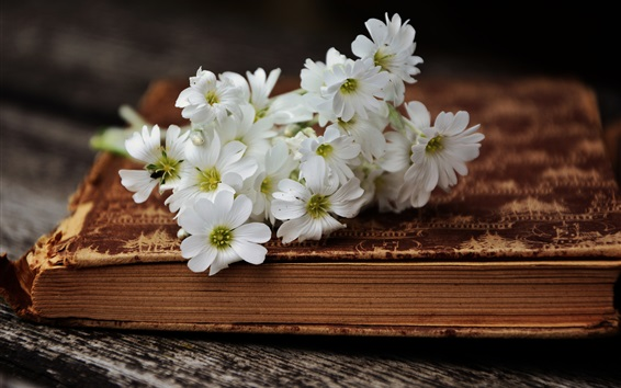 White little flowers and book Wallpaper Preview