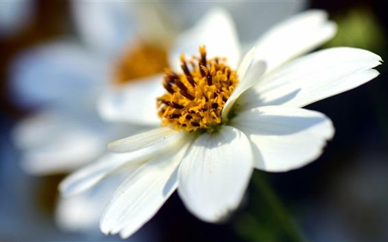 Fond d'écran Pétales blancs fleurs Macro photographie
