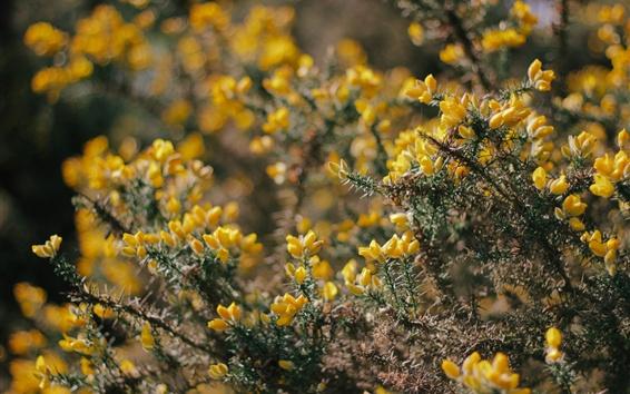 Papéis de Parede Flores amarelas, galhos, flocos