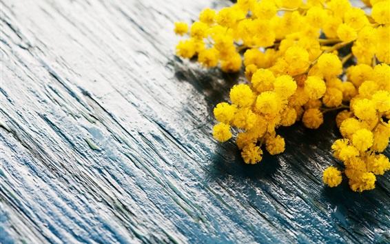 Papéis de Parede Flores amarelas, primavera, mimosa, placa de madeira