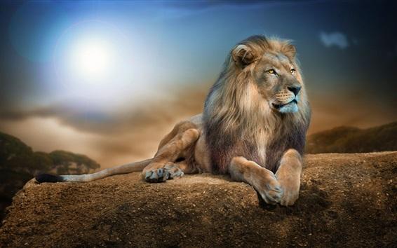 Papéis de Parede Close up animal, leão, descanso, rochas, luz do sol