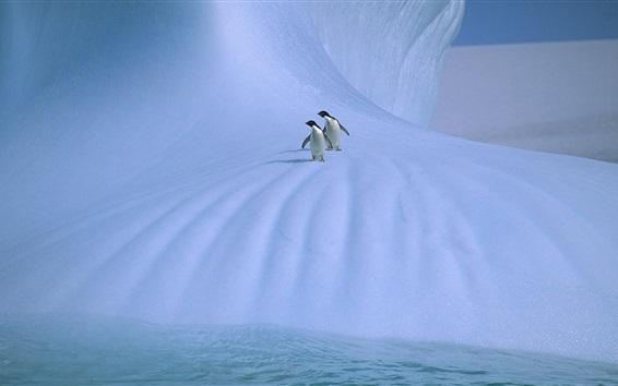 Papéis de Parede Antártica, dois pingüins, gelo