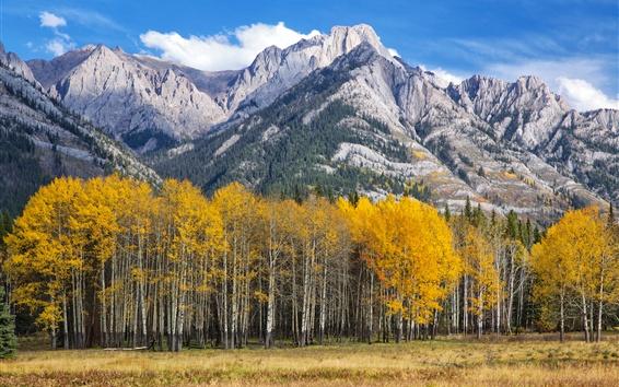 Papéis de Parede Aspen, Colorado, EUA, montanhas, árvores, outono