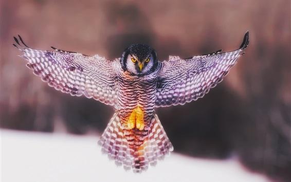 壁紙 鳥のクローズアップ、フクロウ、羽