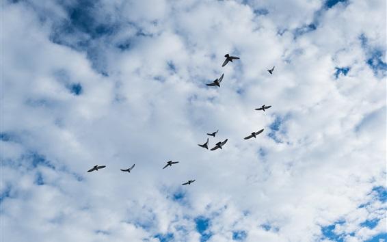 Papéis de Parede Pássaros voando, céu, nuvens