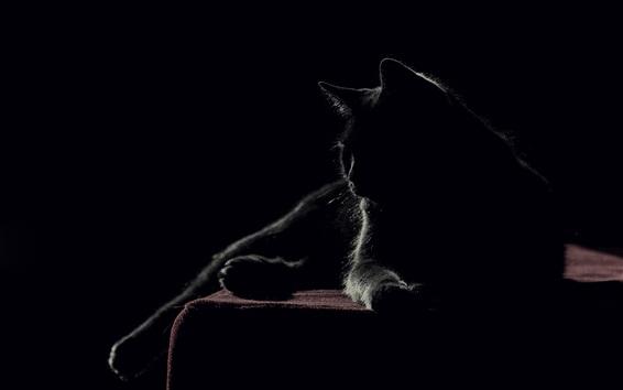 Wallpaper Black cat, black house