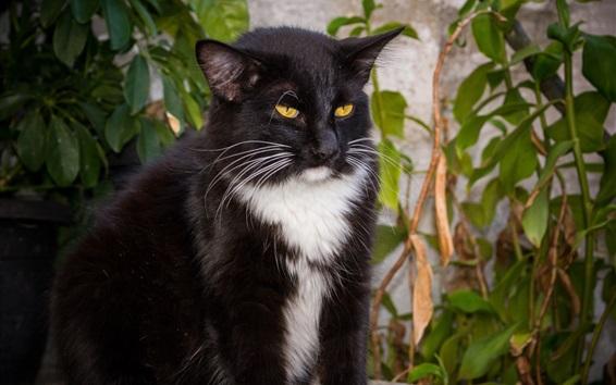Wallpaper Black cat brooding, yellow eyes