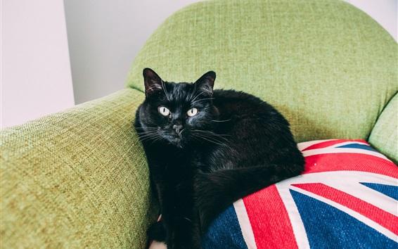 Wallpaper Black cat, sofa
