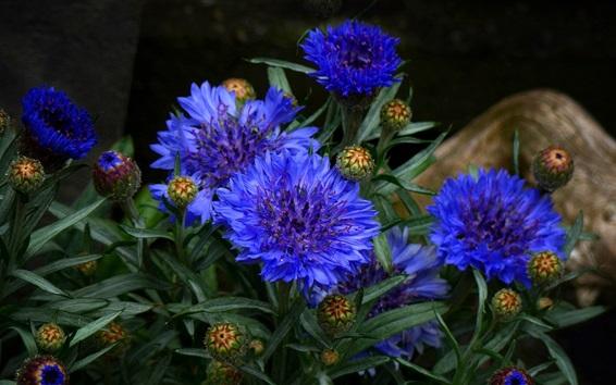 Wallpaper Blue petals flowers