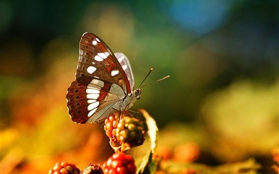 Hintergrundbilder Schmetterling, Beeren, Bokeh