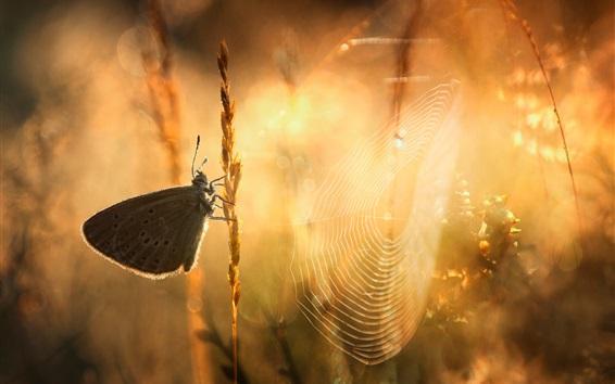 Wallpaper Butterfly, web, grass, sunshine