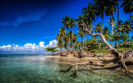 Wallpaper Caribbean, palm trees, beach, sea, clouds, Dominican Republic