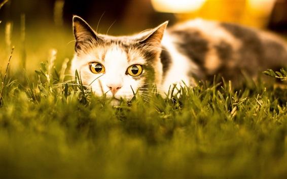 Обои Кот отдыха в траве, лицо, взгляд, глаза