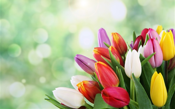 Wallpaper Colorful tulips, yellow, white, red, pink