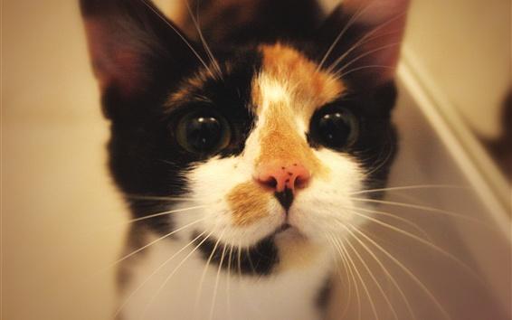 Wallpaper Cute kitten front view, look, pet