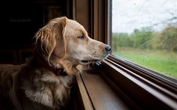 Papéis de Parede Olho do cão na janela