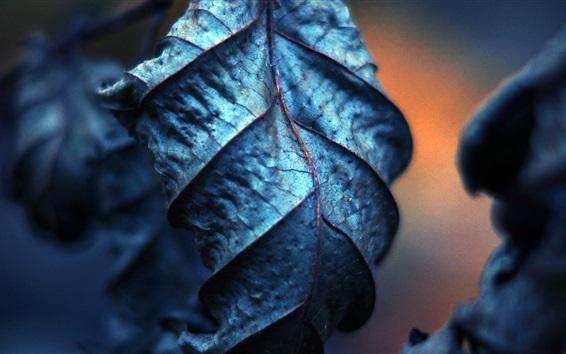 Fond d'écran Photographie macro de feuilles sèches