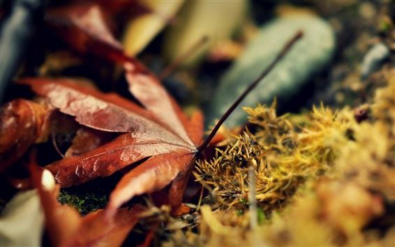 배경 화면 건조한 단풍 나무 잎, 젖은