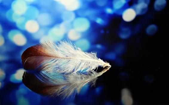 Papéis de Parede Pena, reflexão, espelho, fundo azul, brilho
