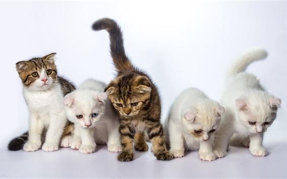 壁紙 5匹の猫
