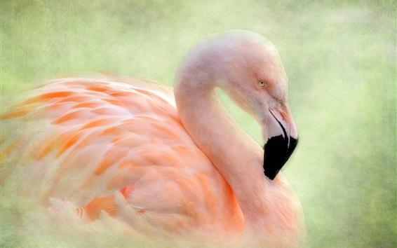 Обои Фламинго, птица, фон текстуры