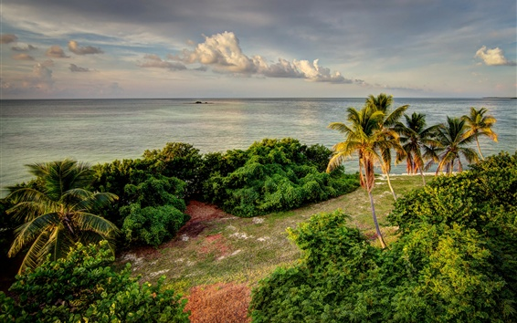 Wallpaper Florida, Bahia Honda State Park, USA, palm trees, coast, sea