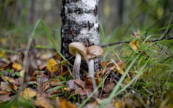 壁纸 森林,蘑菇,叶子,秋天