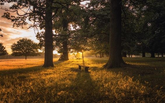 배경 화면 숲, 나무, 잔디, 벤치, 새벽, 일출