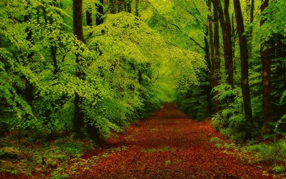 Обои Лес, деревья, путь