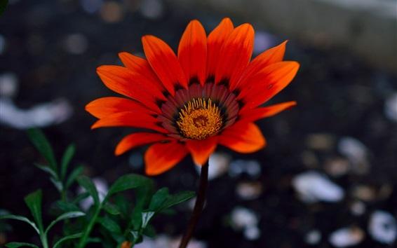 Papéis de Parede Flores de jardim, pétalas de laranja
