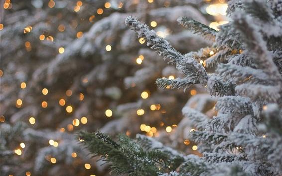 壁紙 眩しいライト、トウヒ、木、雪