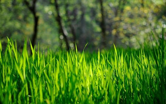 Wallpaper Grass, green, bokeh, nature