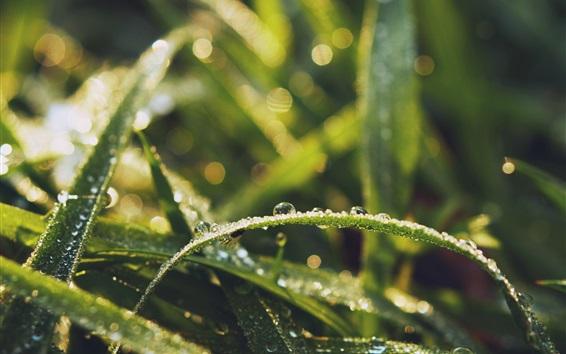 Обои Травяные листья, капли воды, роса, насекомые