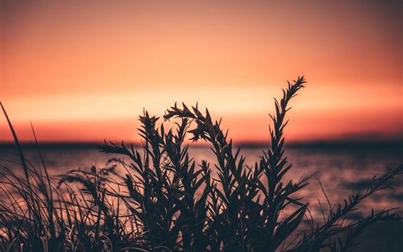 Fond d'écran Herbe, plantes, coucher de soleil, ciel rouge