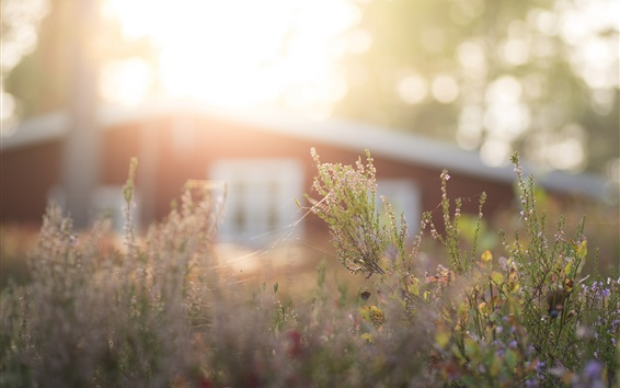 Wallpaper Grass, sunlight, glare, wildflowers