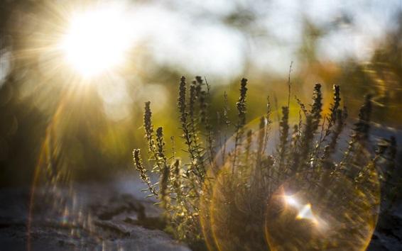 壁紙 草、日差し、グレア