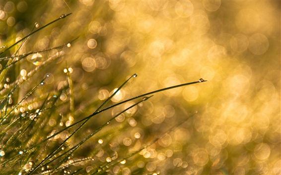 Обои Трава, солнце, роса, блики