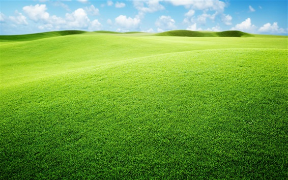 Wallpaper Grassland, green, sky