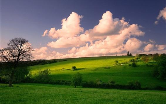 壁紙 草原、木々、雲