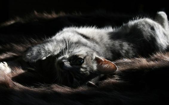 Papéis de Parede O gatinho cinzento dorme, olha para você, fundo preto