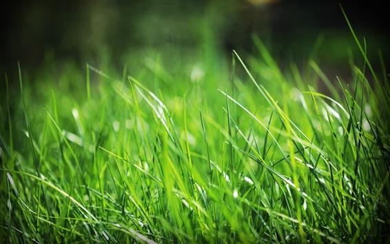 壁紙 緑の草、夏
