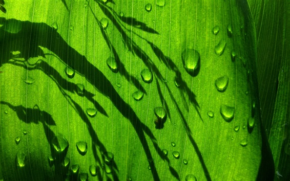 Wallpaper Green leaf, water drops, light