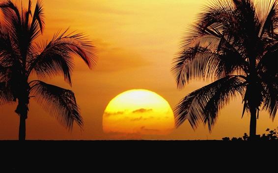 Wallpaper Hawaii, beach, sunrise, palm trees